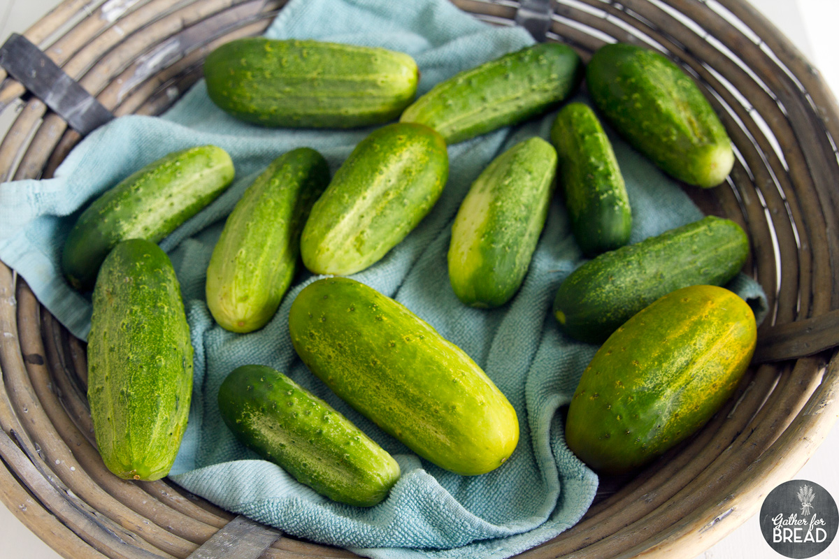 Bread and Butter Refrigerator Pickles - How to with Pictures, Making Sweet Pickles